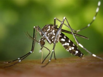 Close-up photo of a mosquito.