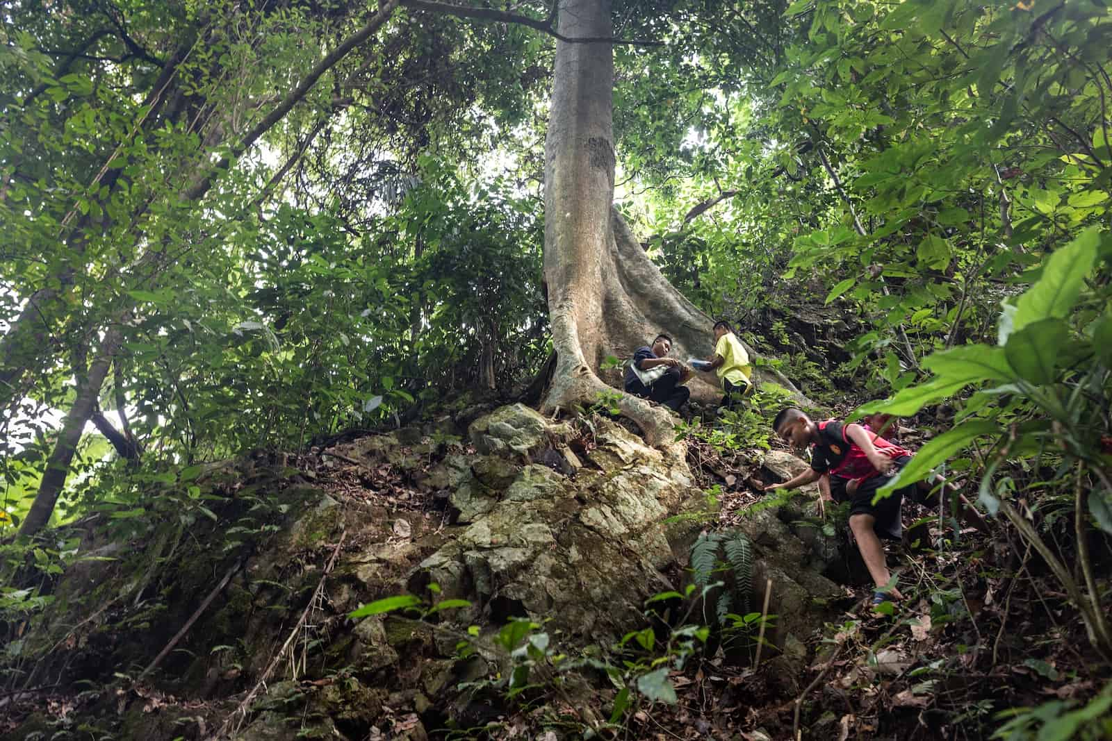 Three boys who live in poverty climb up a steep slope to the roots of a large tree in a forest, surrounded by green canopy. They are learning to protect the rainforest