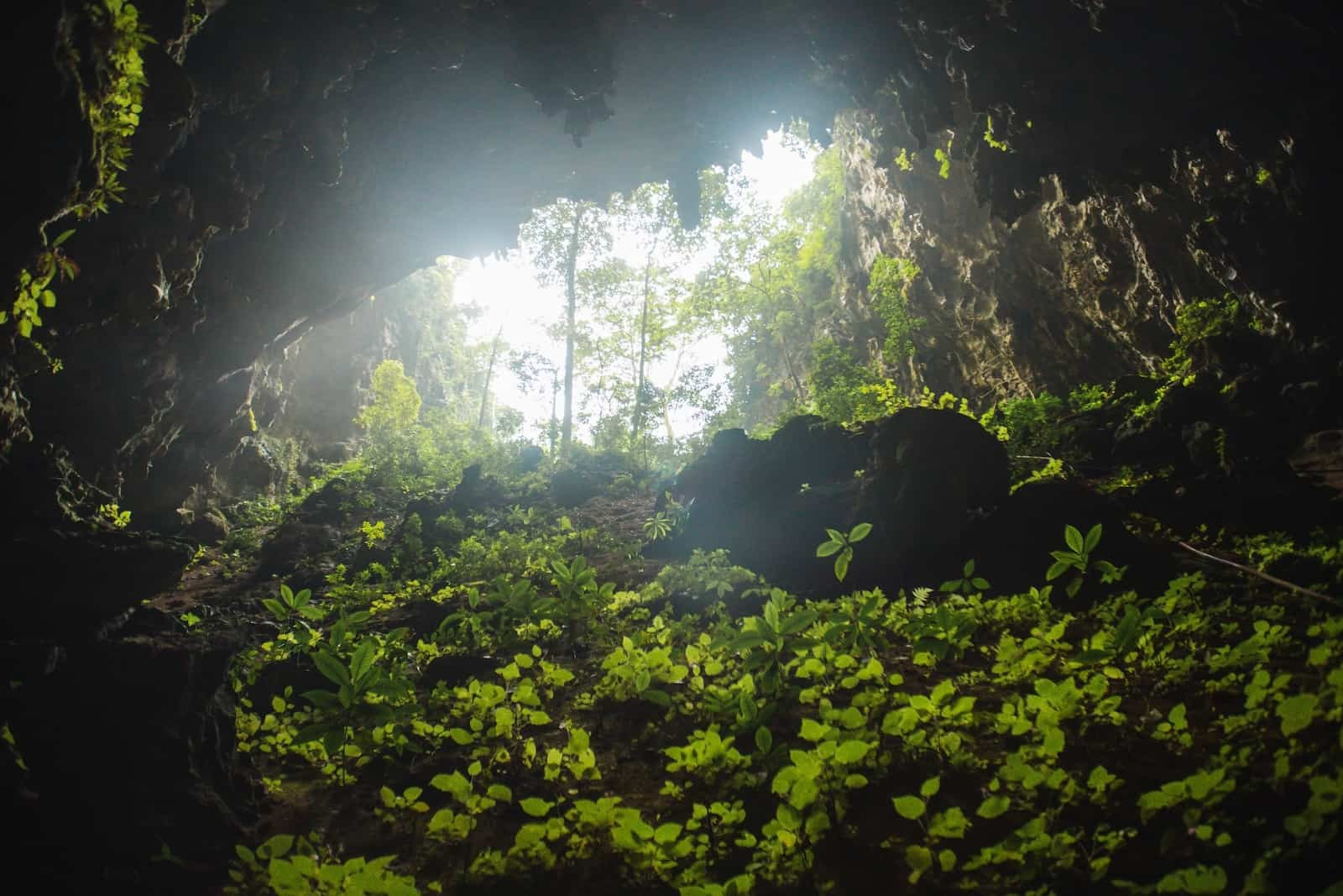 The mouth of the Tham Luang Nang Non cave in the Chiang Rai Province of Thailand, the site of the Thailand cave rescue; there is rock covered in foliage and trees outside the cave mouth.