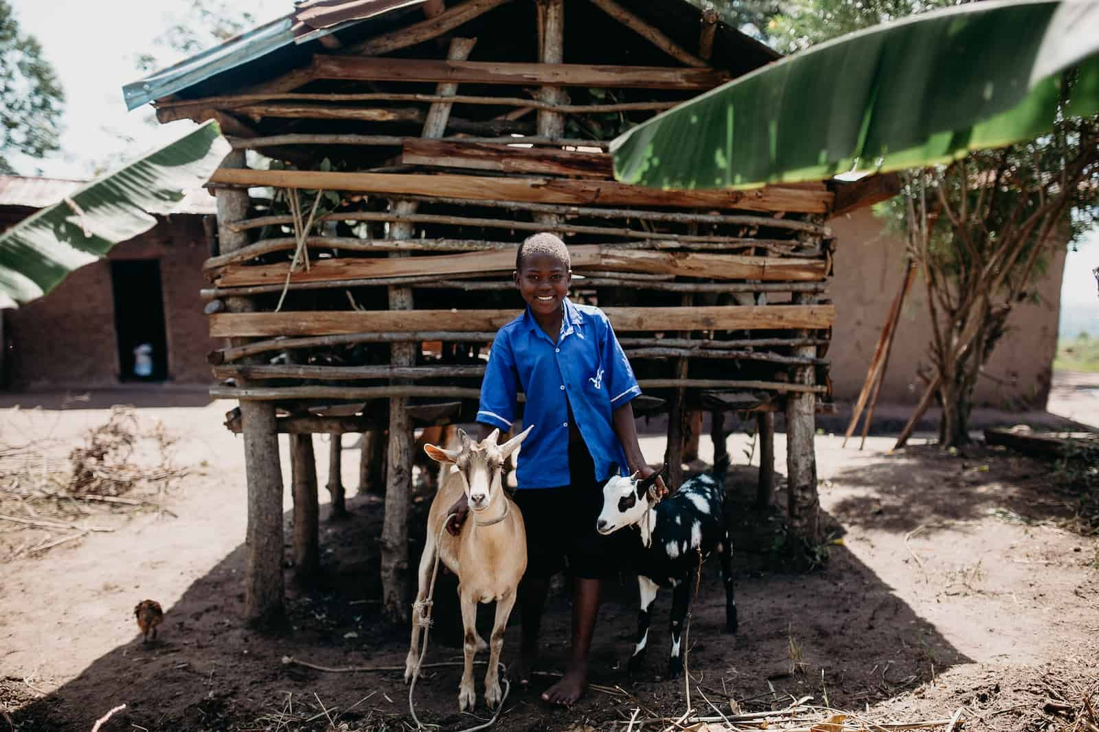 Give a goat: a girl stands outside a wood animal pen with two goats.