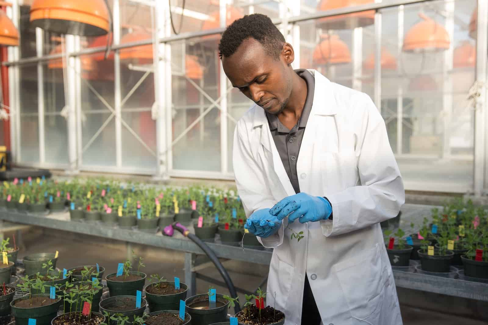 A man in a white lab coat and gloves looks at plants in a greenhouse.