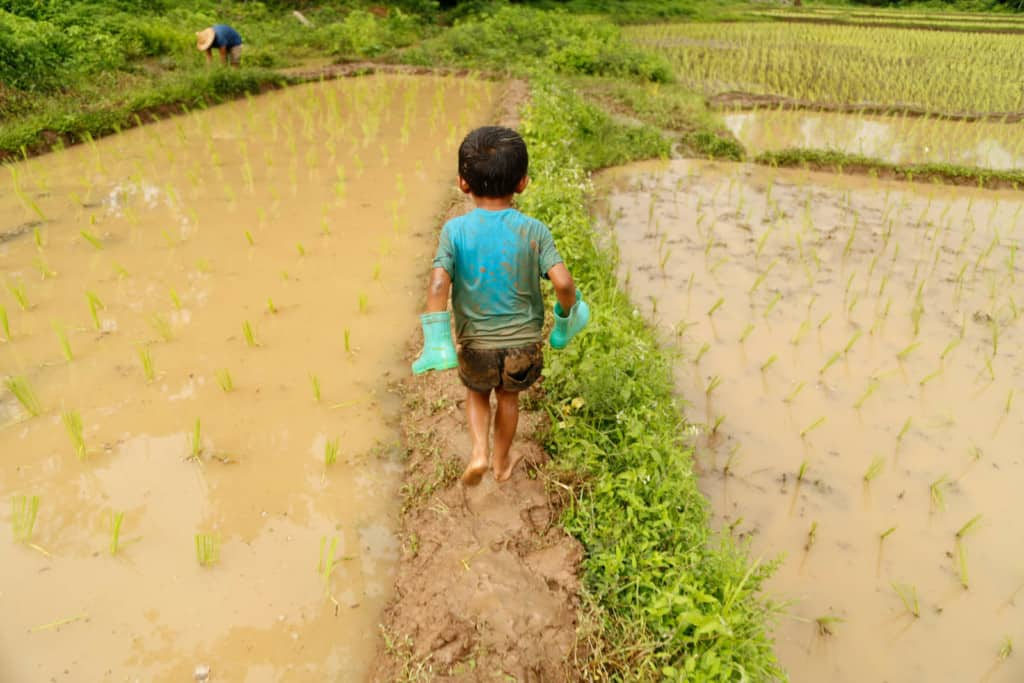 A little boy walks outside on a muddy dirt countryside path surrounded on either side by rice patty fields and in his little hands he holds blue boots so that he is walking barefoot.