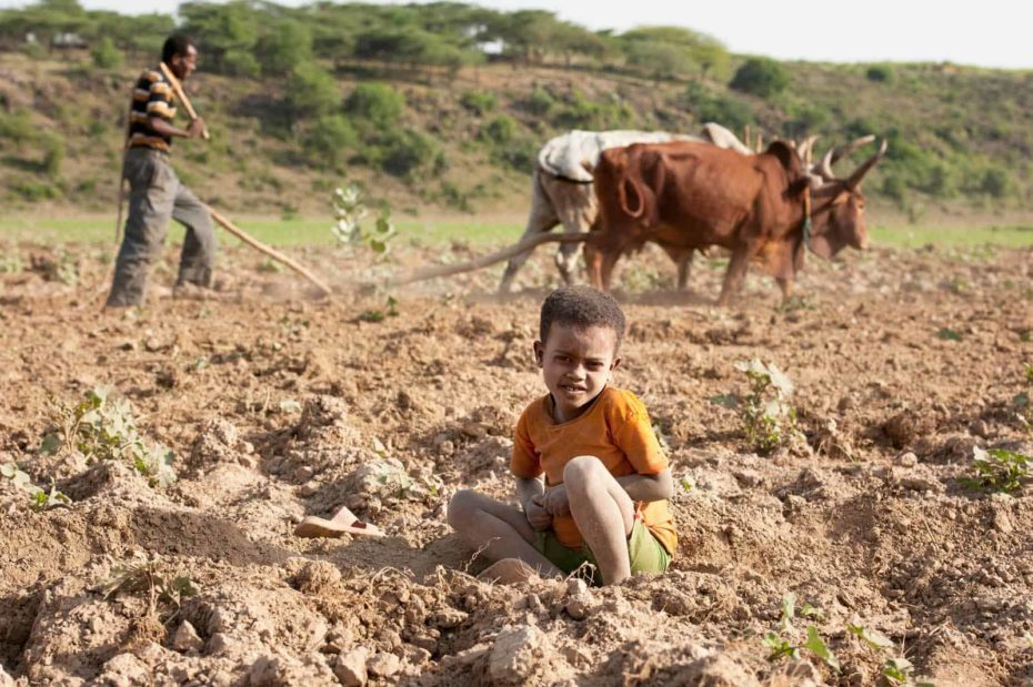 Boy sitting in a dirt field while a man with oxen plows in the background