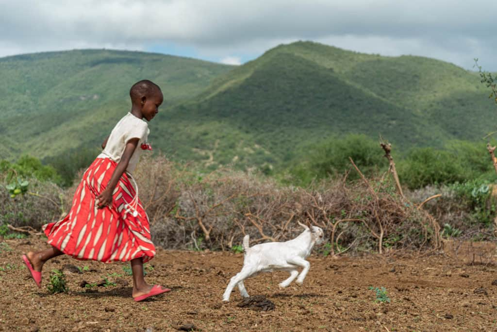 Paulina is wearing a white shirt with a red and white skirt. She is outside her home chasing a white baby goat. There are green hills in the background.