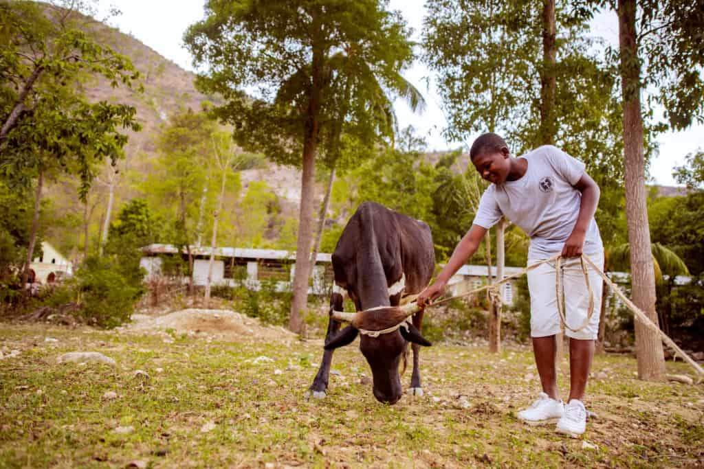 Young man is holding the horn of his black cow received from the project. Wilnick is wearing a gray shirt with tan shorts and white shoes.