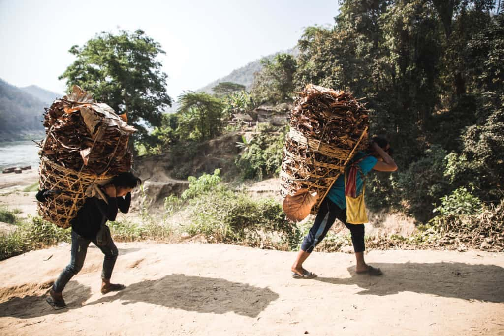 The villagers of Wakletha are carrying leaves for rebuilding and fixing their roofs. They are carrying the leaves in large baskets and there are trees in the background.
