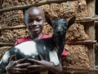 A young boy wearing a red T-shirt holds a black and white goat. He is standing in front of a structure made of mud and wood.