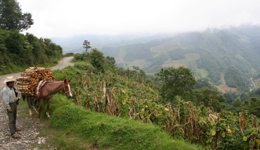 An adult field worker walks a brown horse loaded with firewood down a rural mountainous landscape road.