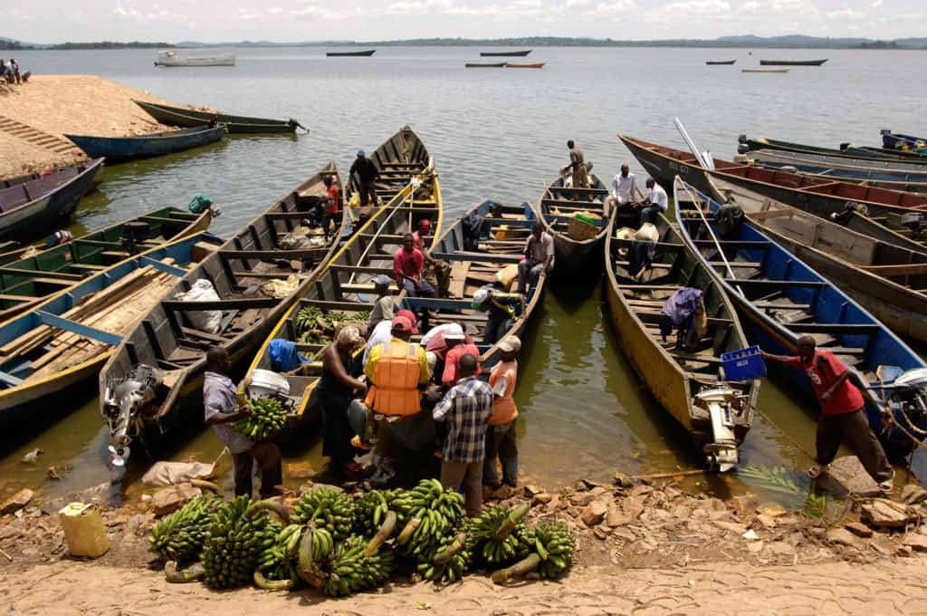 Long narrow shaped fishing boats line the dock, harbor area with fisherman, a group of men, working loading the boat vessels with bananas and other food they have purchased on the main land.