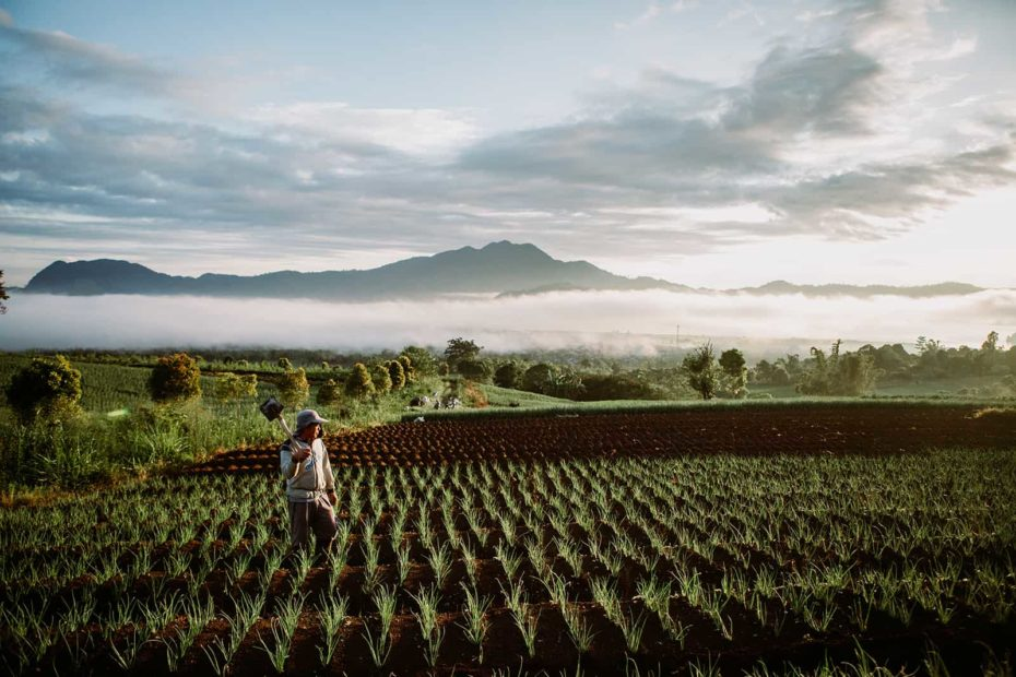 A farmer stands in fields in the early morning in Indonesia